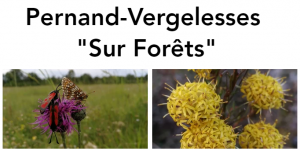 pernand_vergelesses_sur_foret