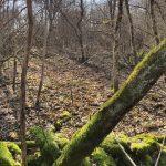 Forêt sans épave
